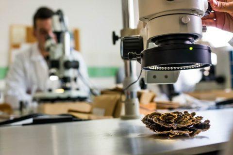 huba pod mikroskopem